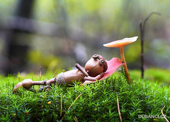 Šlofík pod houbou