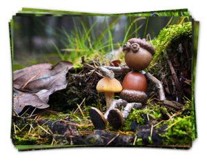 Dubánčí podzimní pohledy s houbami v lese