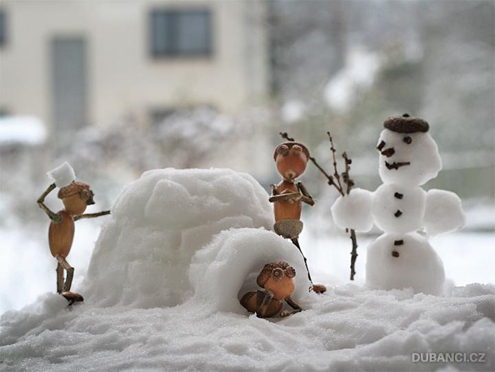 Dubánci na sněhu
